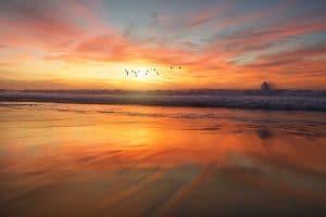 BirdsSunset-frank-mckenna-140054-unsplash